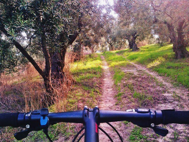 green path, olive trees, my handlebar
