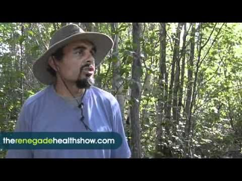 How to harvest Chaga, a mushroom that grows on Birch trees, and has phenomenal antioxidant power for many health issues. Used as tea, tinctures, etc.