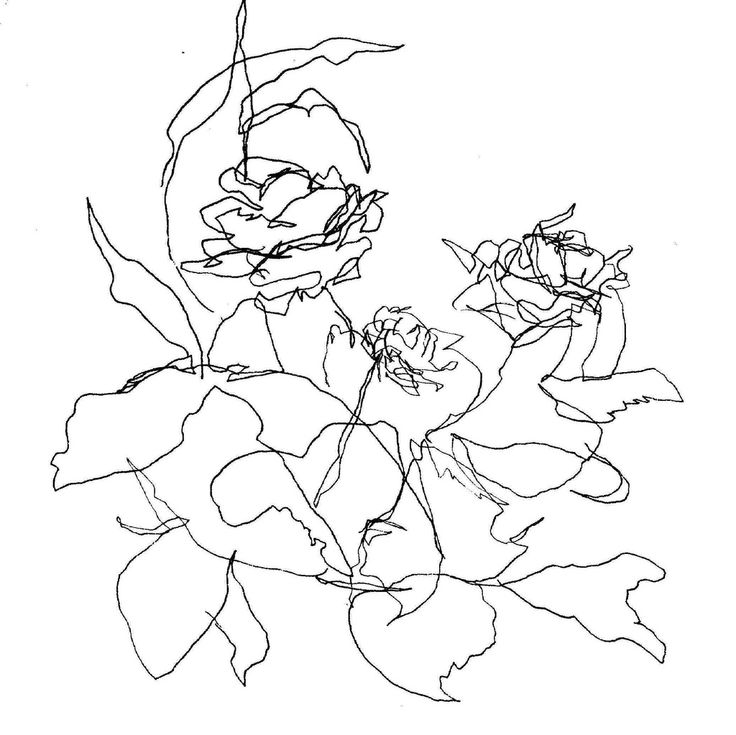 Blind Contour Line Drawing Lesson : Best ideas about contour drawings on pinterest