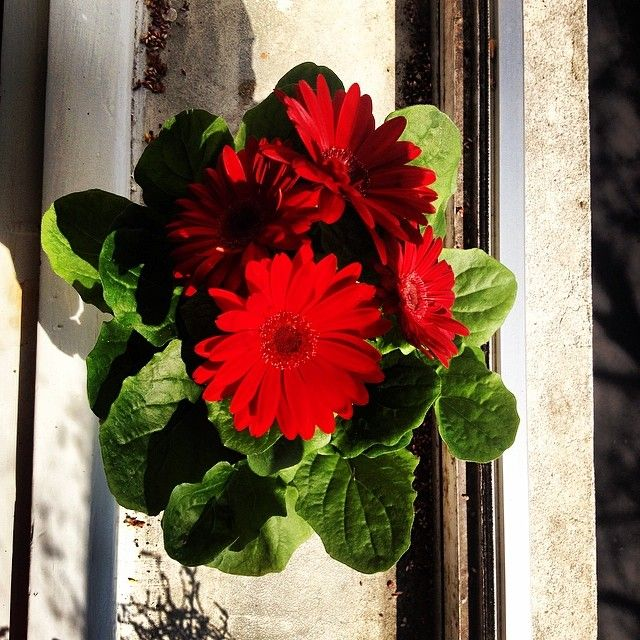 New friends#flovers #red #green #bio #spring