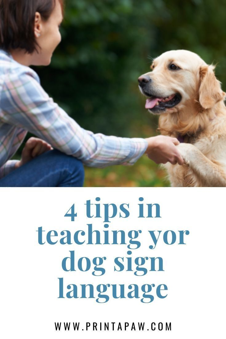 Cost Brain Training 4 Dogs