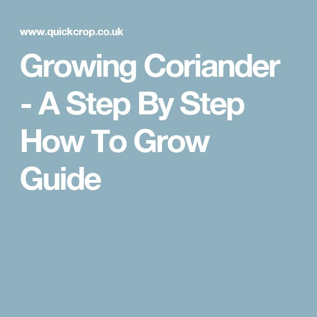 Growing Coriander - A Step By Step How To Grow Guide