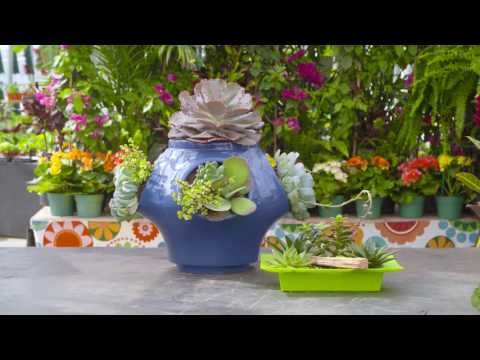 Plant for the summer's heat - add succulents to your garden! Try making this unique DIY succulent planter. Carson Arthur #TERRAatHome