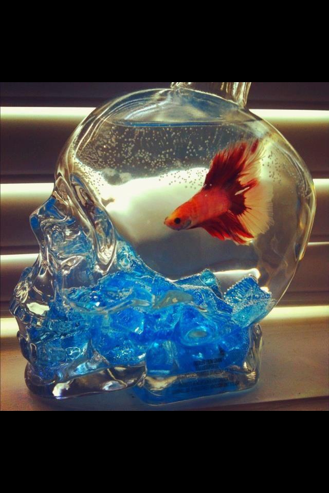 Skull fish bowl skulls pinterest bottle for Bottled water for betta fish