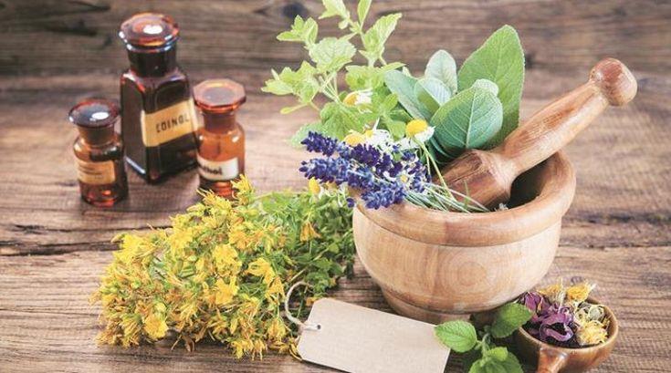 Medicinal herbs you can grow