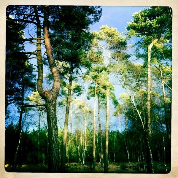 Forest, jan 2012 near den Bockenrijder