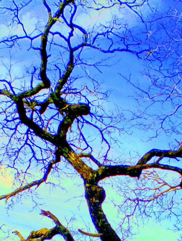 Abstract Kiaat tree