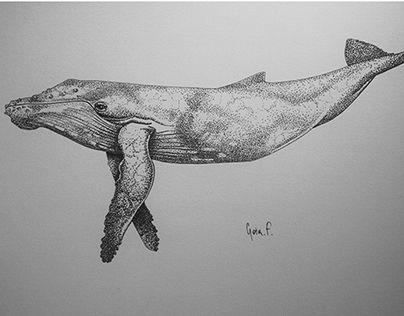 """Check out this @Behance project: """"Humpback whale"""" https://www.behance.net/gallery/19750345/Humpback-whale"""