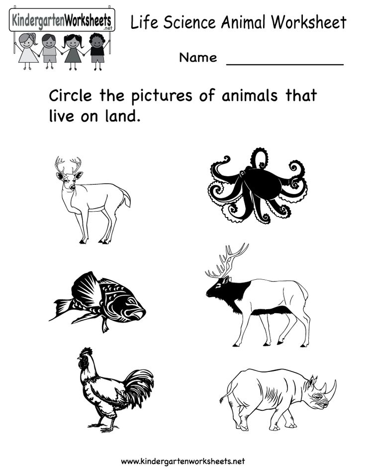1000+ images about Science Worksheets and More! on Pinterest ...Kindergarten Life Science Animal Worksheet Printable