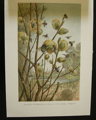 Quadro primaverile della vita degli insetti. s.d. (ma 1900 ca.). Storia natule - Etologia - Animali - Insetti -  Stampa - Scienza -