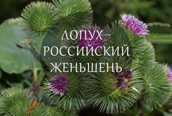 МОЙ САД |Дача, загородный дом, огород, растения | ВКонтакте