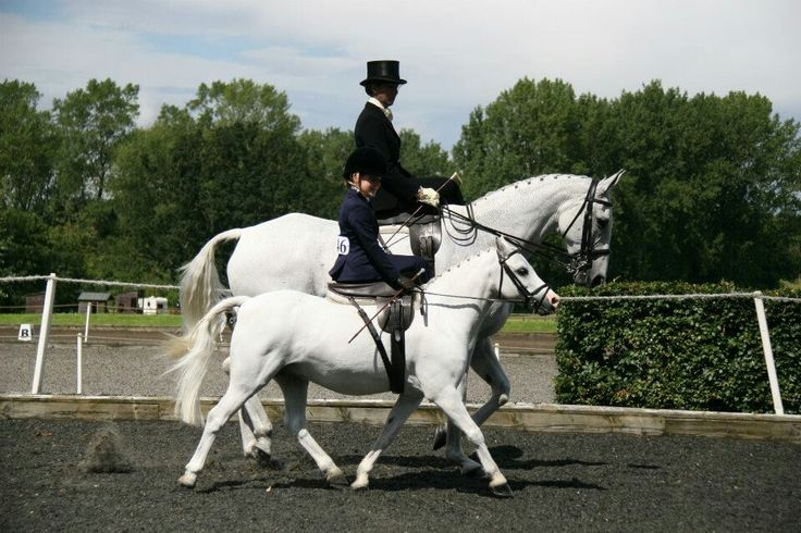 166 Best Images About Riding Aside For Sidesaddle Lovers