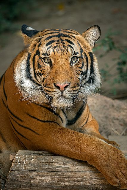 Connor perfects his modeling pose. Tiger