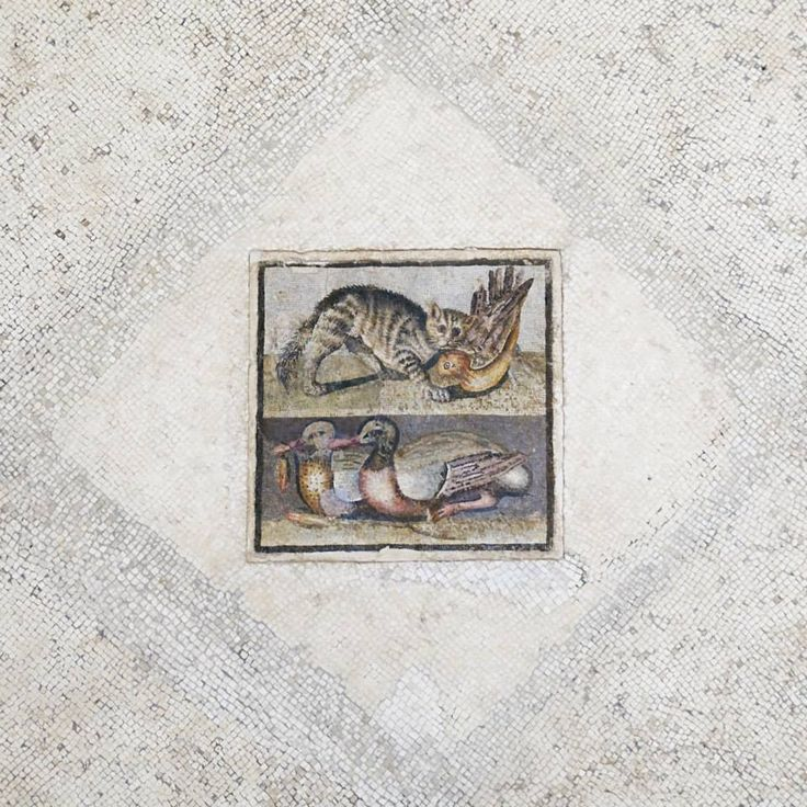Central panel of a floor mosaic with a cat and two ducks. Opus vermiculatum, Roman artwork of the late Republican era, first quarter of the 1st century BC.  Palazzo Massimo alle Terme Rome Italy.