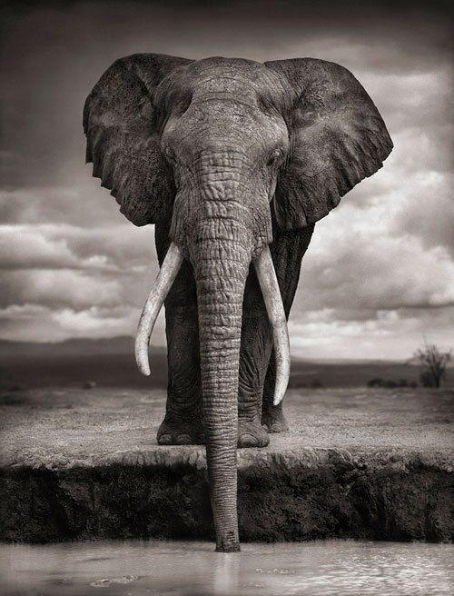 yes, I love elephants!