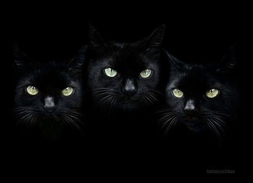 "deepsoulfury: "" Gif-Black Cats """