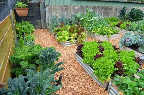 Superbe Organic Garden Design Winter Garden Design And Maintenance Can Your New Hob  Be Model | Edible Garden | Pinterest | Edible Garden, Winter Garden And  Gardens