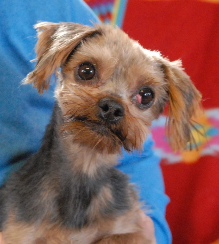 Trixie is a delightful little lady with a sparkling ...