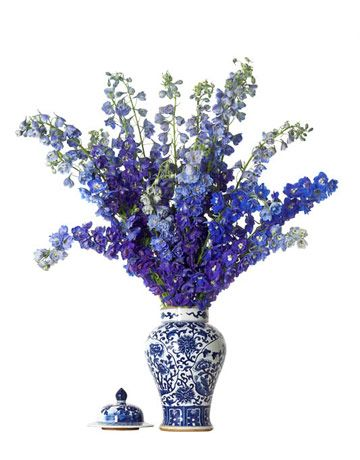 delphiniums look fabulous in this blue and white ginger jar itu0027s a very dramatic look - Ginger Jars