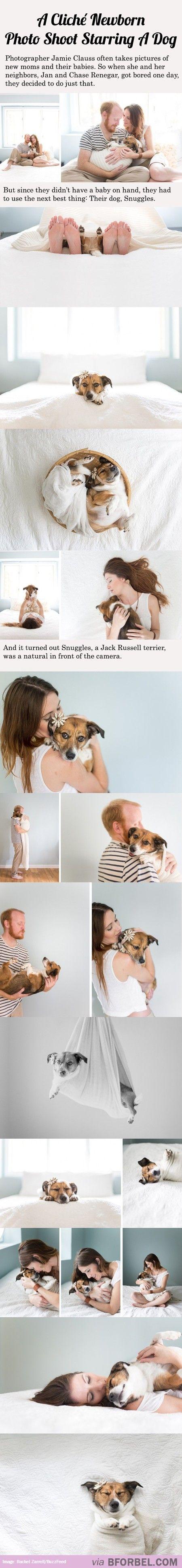 20 Cliche New Born Photos Starring A Dog…