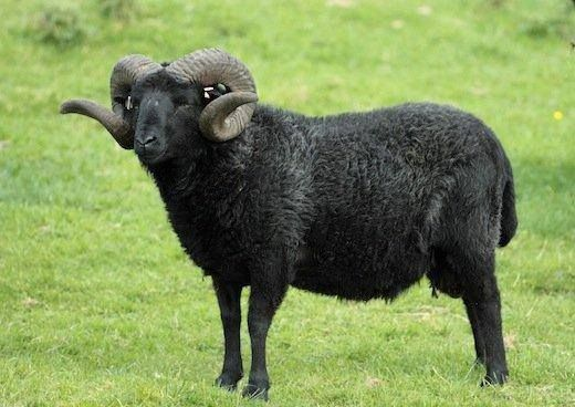 #HOTELS #SWD #GREEN2STAY Black Sheep Inn, Ecolodge, Ecuador Black Sheep is NOBLE ~ Black Friday is STUPID!