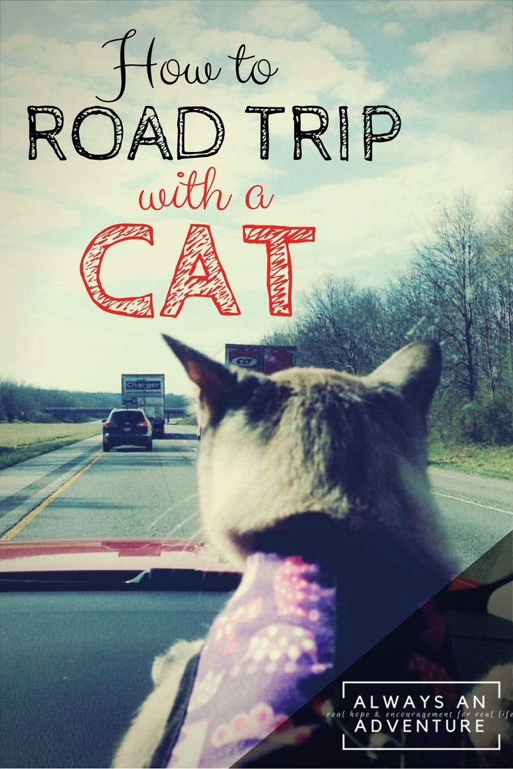 Can you road trip with a cat? Turns out you can! We just got back from a 3,000 mile trip with two kids and a cat in the back seat. Here's how we did it.