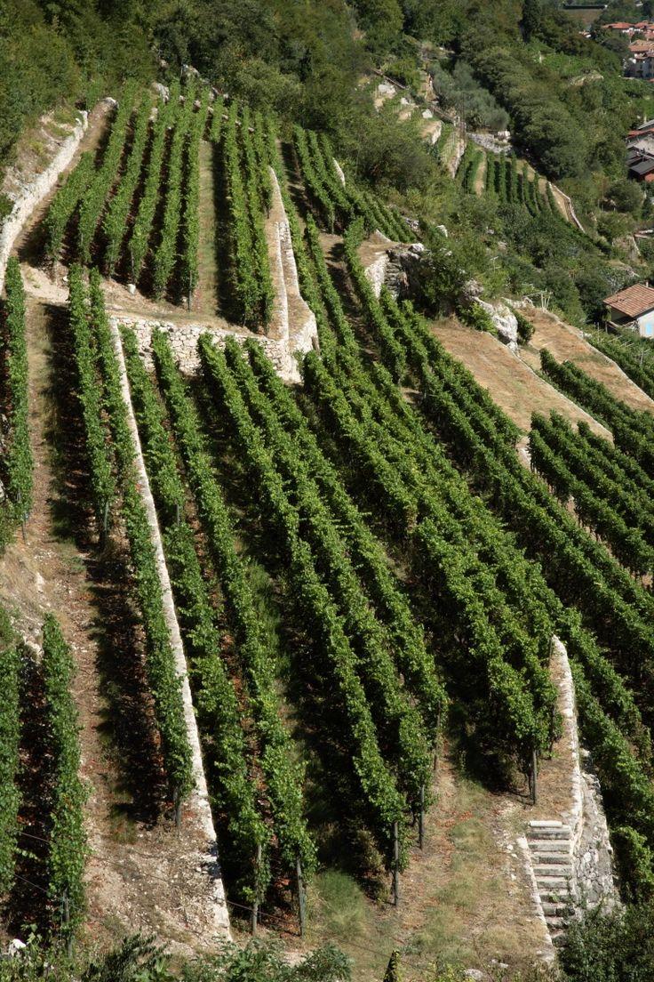 Cantina Grigolli Bruno, commento, info e foto di una piccola, grande cantina del #trentino http://winedharma.com/it/cantina/azienda-agricola-grigolli-bruno