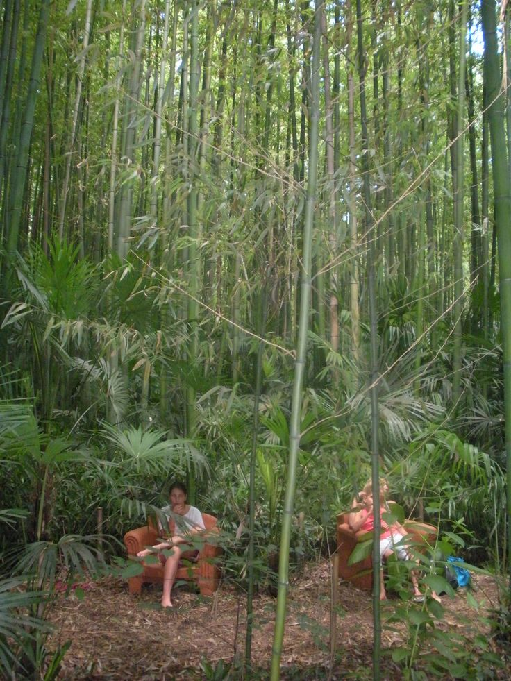 A little rest in the middle of a bamboo forest