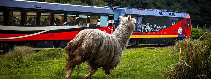 Tren Ecuador. De reizigers eten in dorpsrestaurants, bezoeken Quechuagemeenschappen en slapen in haciënda's.
