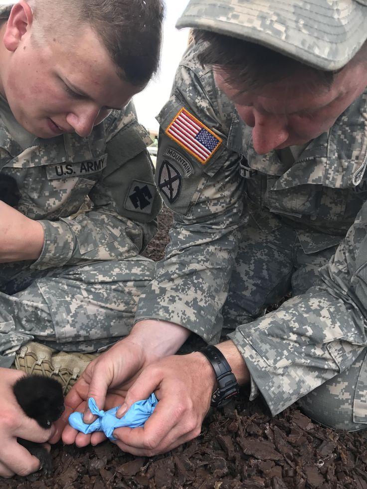 Oklahoma National Guard medics feeding kittens in Texas http://ift.tt/2x8YaGj