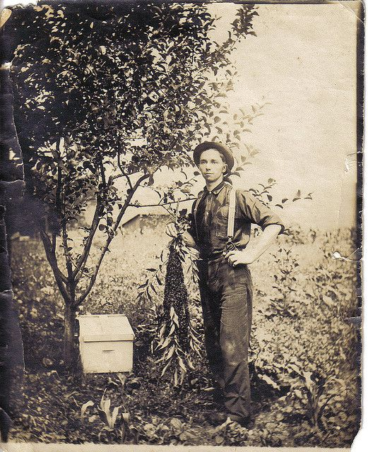 "Old vintage bee keeper, John Van Noate on flickr. ""Hiving swarm of bees."""