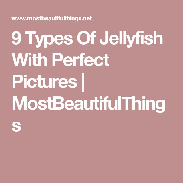 9 Types Of Jellyfish With Perfect Pictures | MostBeautifulThings