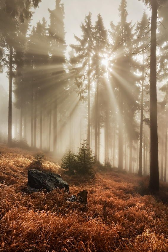 ~~In the autumn forest | autumn crepuscular rays in the Giant Mountains (Krkonoše), Czech Republic | by Daniel Řeřicha~~ | looks exactly like a place I used to live. I sat for hours right in the spot where the rock is there, wrote some poems. cray