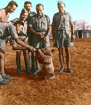 Wojtek, the Polish Soldier Bear, as a young, abandoned (until recently) cub, with Polish soldiers, Iran, 1941.