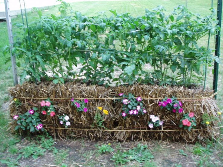 58 Best Images About Straw Bale Gardening On Pinterest