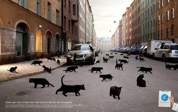 If Car Insurance: Black cats