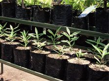 Establish a community nursery as a restoration project