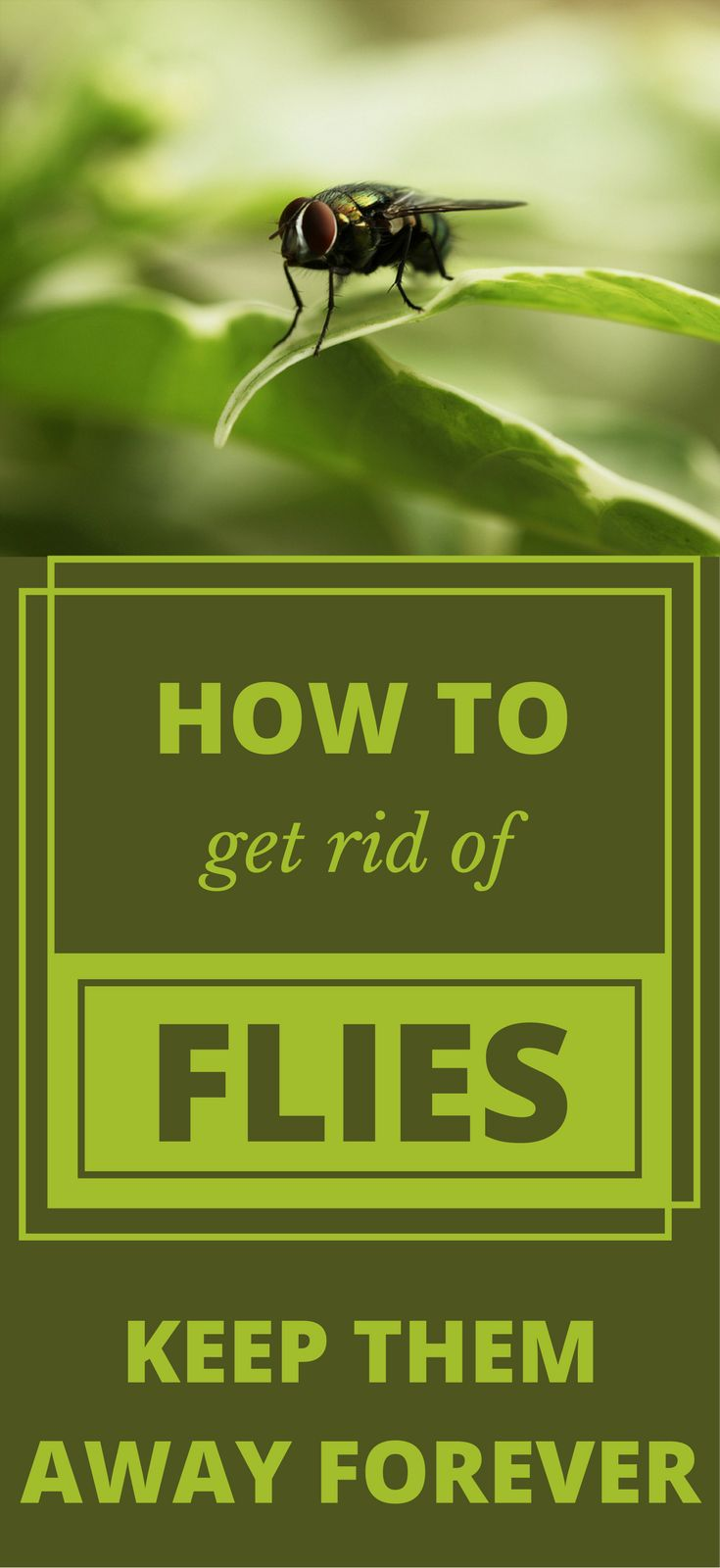 how to keep flies away from your face
