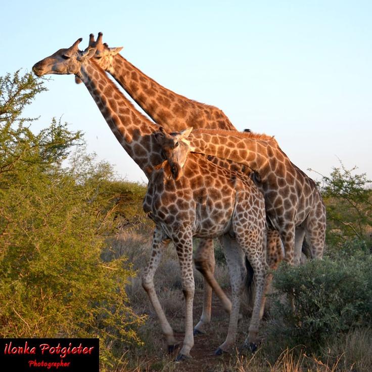 Kruger National Park 2012 - Family Time