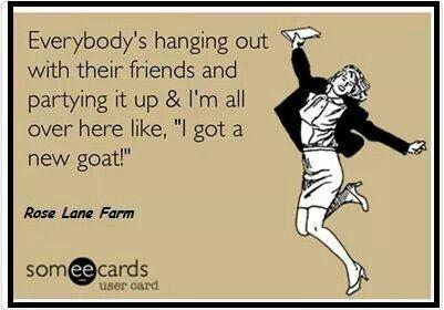 * #babygoatfarm #goatmemes