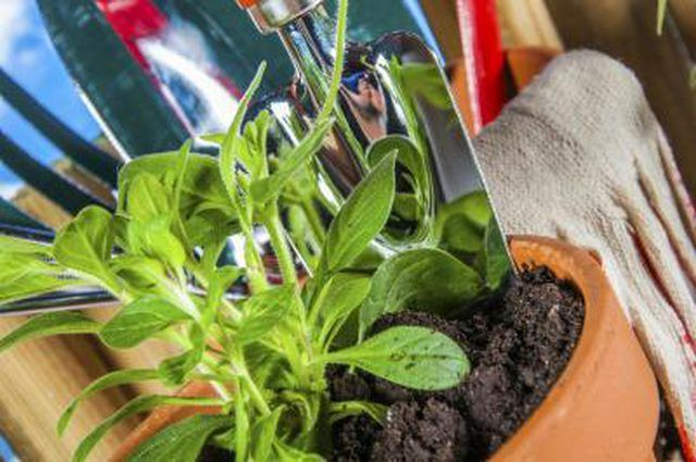 Learn How To Get Rid Of Mold In Plant Soil How To Guides Tips And Tricks Get Rid Of Mold House Plant Care Soil