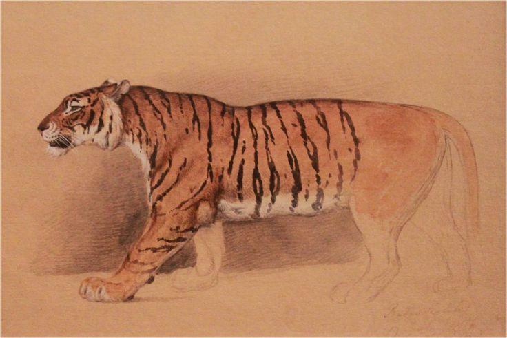 Raden Saleh - Study of walking tiger - Raden Saleh - Wikipedia, the free encyclopedia