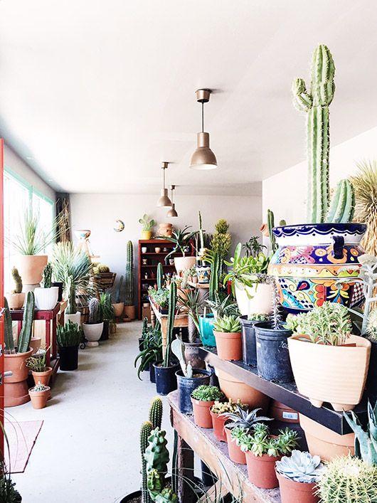 interior of Ponderosa cactus shop / sfgirlbybay