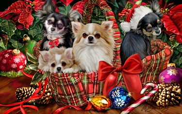 """New for 2014! Chihuahua Christmas Holiday Cards are 8 1/2"""" x 5 1/2"""" and come in packages of 12 cards. One design per package. All designs include envelopes, your personal message, and choice of greeting.Select the inside greeting of your choice from the menu below.Add your custom personal message to the Comments box during checkout."""