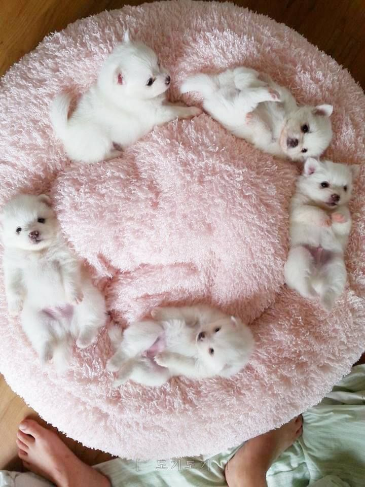 Are these puppies or little polar bear cubs?? So so adorable!