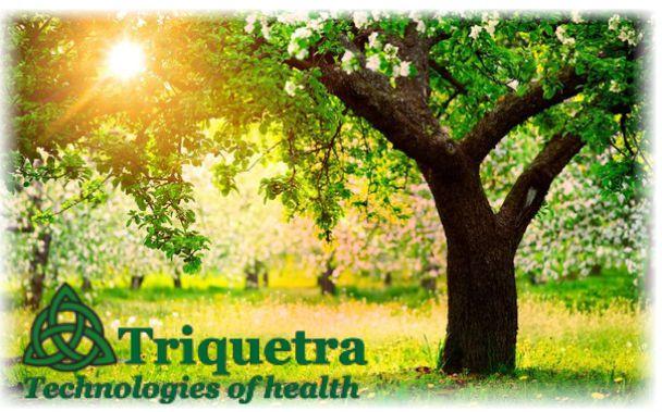 Комплекс Тайцзицюань - Triquetra Технологии Здоровья|Традиционная китайская медицина и цигун