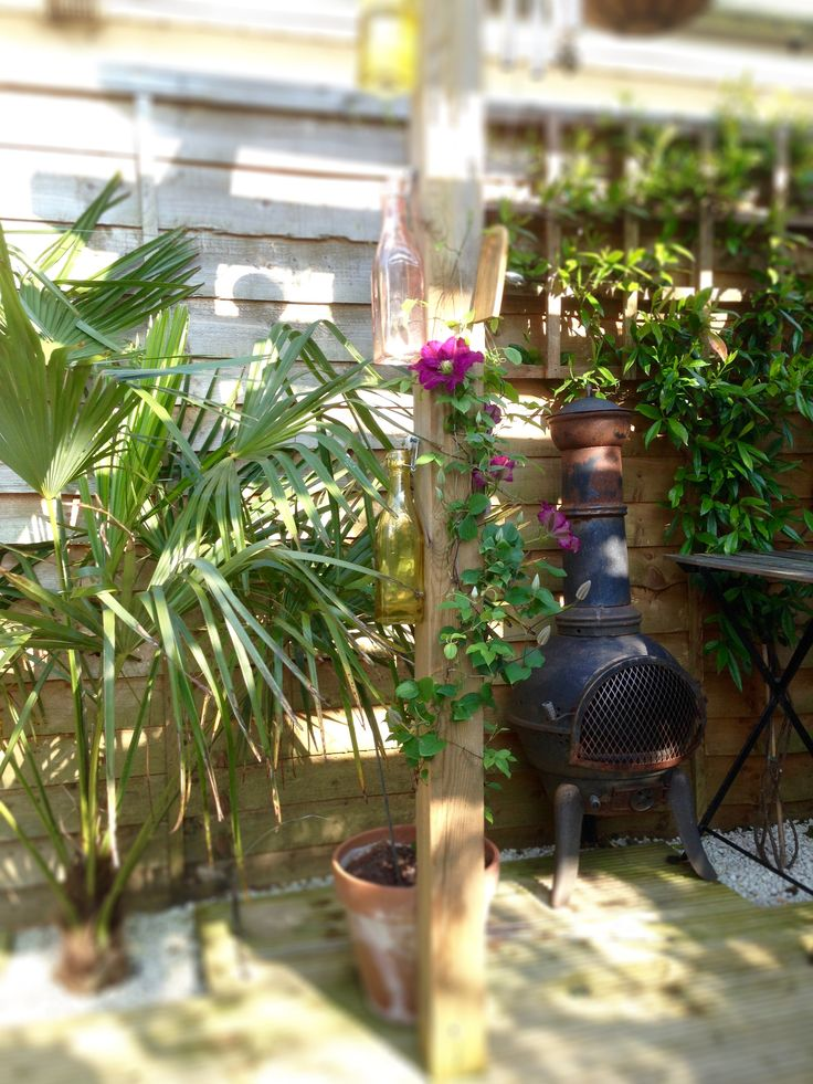 Clematis growing up pergola upright with palm trees & rusted iron chiminea plus IKEA table. This is part of 'tropical garden' area created in UK garden to mix traditional English garden features with more lush, Asian plants.