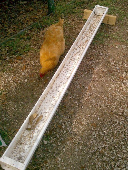 Scrap Guttering Chicken Waterer