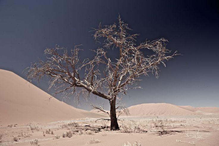 Namib Naukluft National Park in Erongo