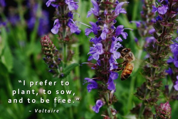 Plant Sow and Be Free Garden Quote at Untrained Housewife. More gardening quotes to inspire! http://www.tomatodirt.com/gardening-quotes.html